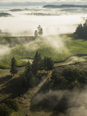 Oregon Wine Country – Insider's Tour